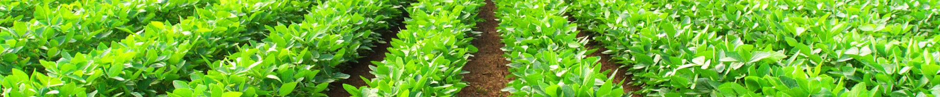 https://biogasanlagen-info.de/wp-content/uploads/2015/03/biogasanlagen-blog-1920x200.jpg