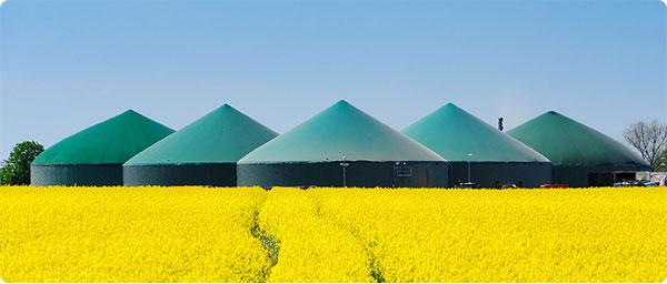 biogasanlagen-mais